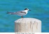 021  To Every Thing, Tern, Tern, Tern.jpg