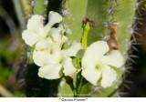 062  Cactus Flower.jpg