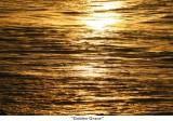 067  Golden Grace.jpg