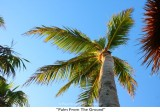 084  Palm From The Ground.jpg