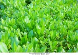 091  The Green Goes On.jpg