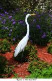 113  Egret In The Garden.jpg