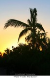 116  Palm Tree In The Sunset.jpg