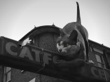 The Giant Cat of Catford .London SE.jpg