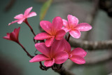 Kauai Flora 2009