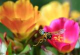 Macro photography & close up