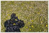 Flowery self-shadow-portrait  of poet-photographer...