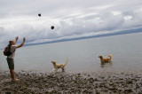 Tossing Coconuts to the Golden Retrievers or Yellow Labs Golfo Dulce
