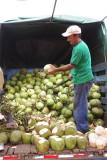 Rohrmoser Farmer's Market Coconut Vendor