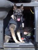 Argo in protective vest