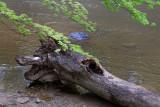 Fallen Log *.jpg
