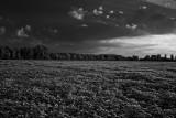 Farmer's Field.jpg