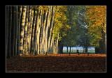 Versailles gardens (EPO_5655)