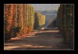 Versailles gardens (EPO_5724)