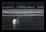 le grand canal - Versailles (EPO_6802)