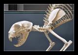 Giant cat skeleton by Dan halen - Tate Modern (EPO_7007)