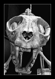 Giant cat skeleton by Dan halen - Tate Modern (EPO_7009)