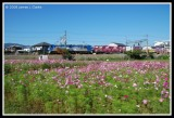 Kosumosu Field and Freight Train