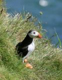 Birding in Scotland