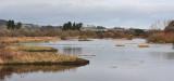 Morton Lochs looking towards Tayport