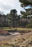 Tentsmuir - Kinshaldy picnic area
