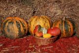 Pumpkins bu�e_MG_1604-1.jpg