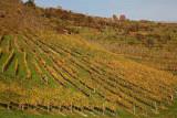 Vineyard vinograd_MG_3047-1.jpg