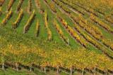 Vineyard vinograd_MG_1136-1.jpg