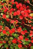 Autumn leafs jesensko listje_MG_1084-1.jpg