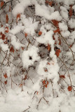 Snow sneg_MG_4092-1.jpg