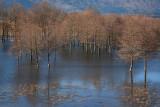 cerknica_lake