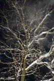 Winter haze zimska meglica _MG_6348-11.jpg
