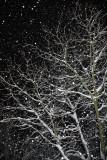 Snowing sne¾enje_MG_6367-11.jpg