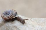 Snail pol¾_MG_3544-11.jpg