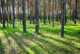 Pine forest borov gozd_MG_9078-11.jpg