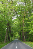 On the road na cesti_MG_9162-11.jpg