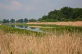 Pond in Milicz ribnik_MG_9640-111.jpg