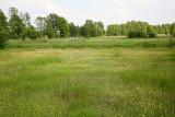 Marsh meadow močvirni travnik_MG_9719-111.jpg