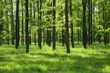 Forest gozd_MG_9707-111.jpg