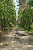 Road cesta_MG_9066-11.jpg