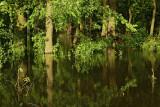 Floodplain forest poplavni gozd ob Muri_MG_8923-111.jpg