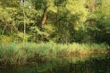 Floodplain forest poplavni gozd ob Muri_MG_9658-11.jpg