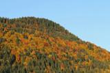 Autumn forest jesenski gozd_MG_5993-11.jpg