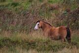 Welsh pony _MG_4748-111.jpg
