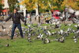 Pigeons golobi_MG_9970-11.jpg