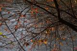 Autumn jesen_MG_6912-1.jpg