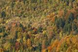 Forest gozd_MG_7481-1.jpg