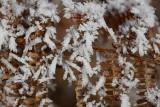 Fern and snow praprot in sneg_MG_0973-1.jpg