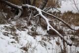 Winter zima_MG_3598-1.jpg