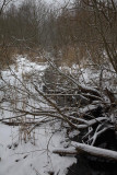 Winter zima_MG_3603-1.jpg